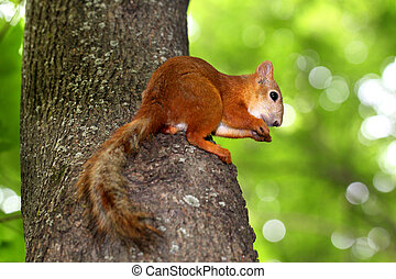 Squirrel sitting in a tree eating a nut