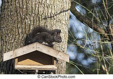 Squirrel sitting on a bird seeder