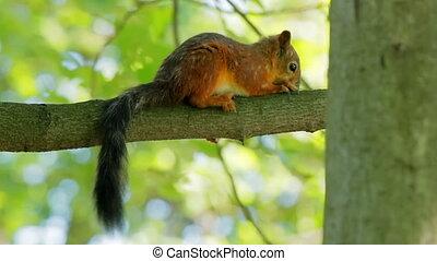 Squirrel sitting on a branch
