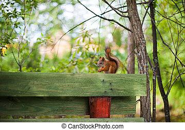 squirrel sitting on a fence