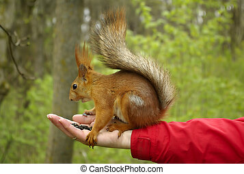 Squirrel sitting on a hand with sunflower seeds