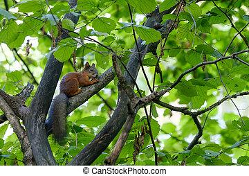 Squirrel sitting on a tree
