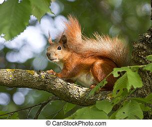 Squirrel sitting on a tree.