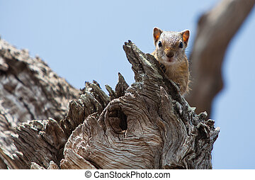 Squirrel sitting on branch in a tree