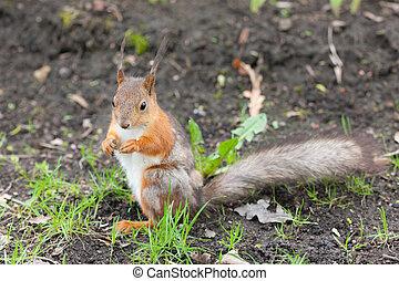 squirrel sitting on the ground