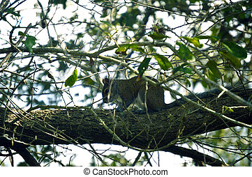 Squirrel sitting on tree picture