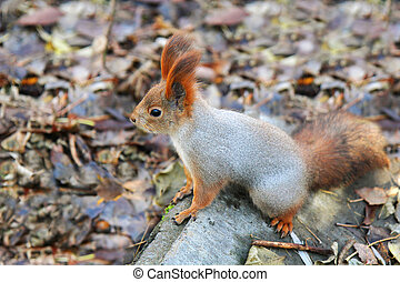 squirrel standing on the ground