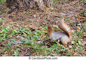squirrel standing on the ground on his hind legs