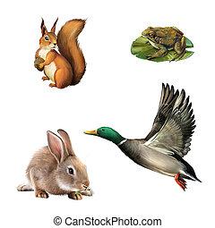 Squirrel, toad, rabbit, drake. Illustration on white background.