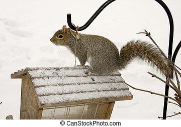 Squirrel Watch
