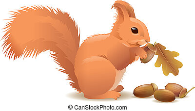 Squirrel with acorns. Contains transparent objects. EPS10