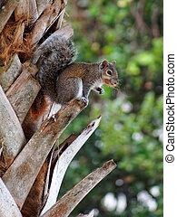 Squirrel with Food in it's Mouth on a Tree