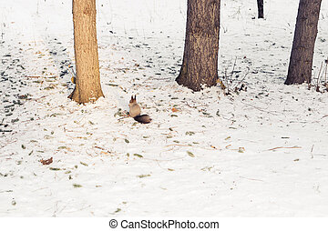 Squirrel with snow forest in the background