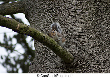 squirrel~5