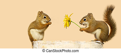 Squirrels in love. - Cute image of a young male squirrel...
