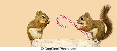 squirrels., kerstmis
