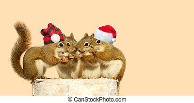 squirrels., navidad