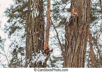 Squirrels sitting on a tree