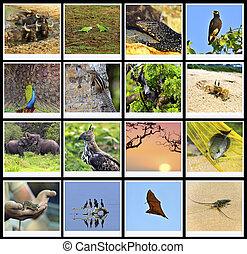 Sri Lanka - The fauna in the park Yala Sri Lanka safari