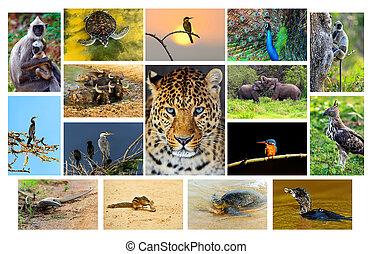 Sri Lanka - The fauna in the park Yala, Sri Lanka
