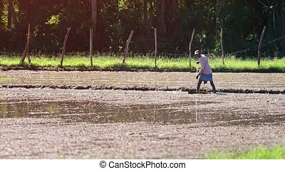 Sri Lankan Farmer Preparing a Rice Paddy for Planting -...