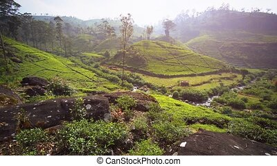 Sri Lankan Hillside Tea Farm from Overlooking Perspective -...