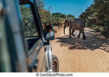 srilanka, gele, wandeling, zand, elefant, straat