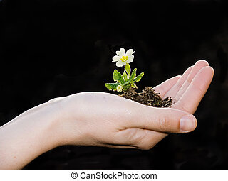 hand with flower isolated on black
