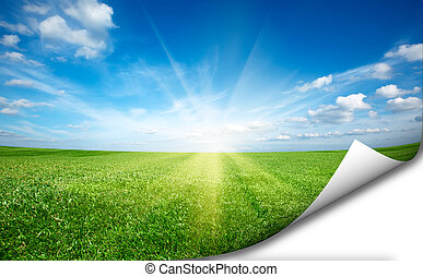 Ssun and green fresh grass field blue sky sticker