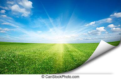 ssun, og, grønne, frisk, græs felt, blå himmel, mærkaten