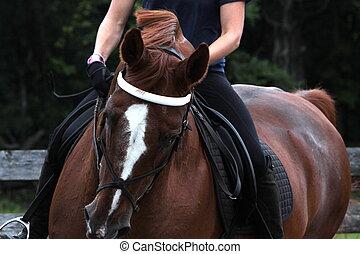 stående, av, a, dressyr, häst