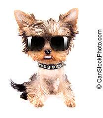 stående, av, hund, med, spiked seldon, och, solglasögoner