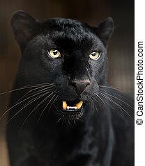 stående, av, leopard