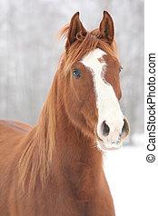 stående, av, trevlig, kastanje, häst, in, vinter