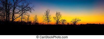 stérile, coucher soleil arbres