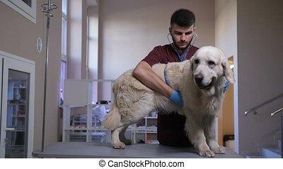 stéthoscope, chien, vétérinaire, hearbeat, écoute