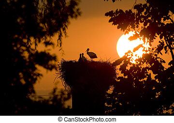 störche, silhouette, nest