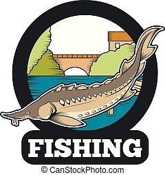 stør, fiske, banner