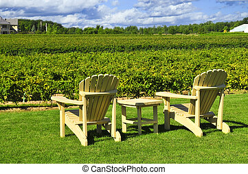 stühle, weinberg, zugewandt