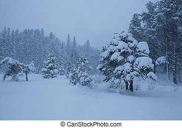 stürmisch, baum winter, landschaftsbild, schnee