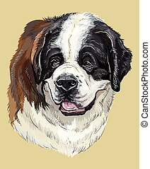 St. Bernard colorful vector hand drawing portrait - St....