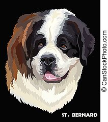 St. Bernard colorful vector portrait - Colored portrait of...