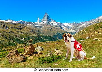 St. Bernard Dog in Switzerland