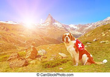 St. Bernard Dog in Switzerland sunset
