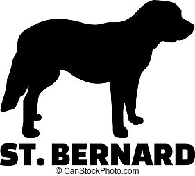 St. Bernard dog with breed name