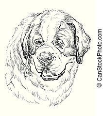 St. Bernard vector hand drawing portrait - St. Bernard dog...