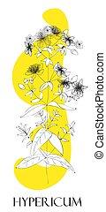 St. John's wort plant. Medicinal herbs. Alternative medicine.