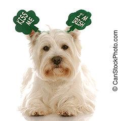 St. Patrick\'s day dog