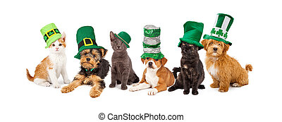 St Patricks Day Puppies and Kittens - A large group of young...