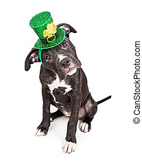 A cute six month old mixed large breed puppy dog wearing a green Irish hat while tilting head and looking into camera